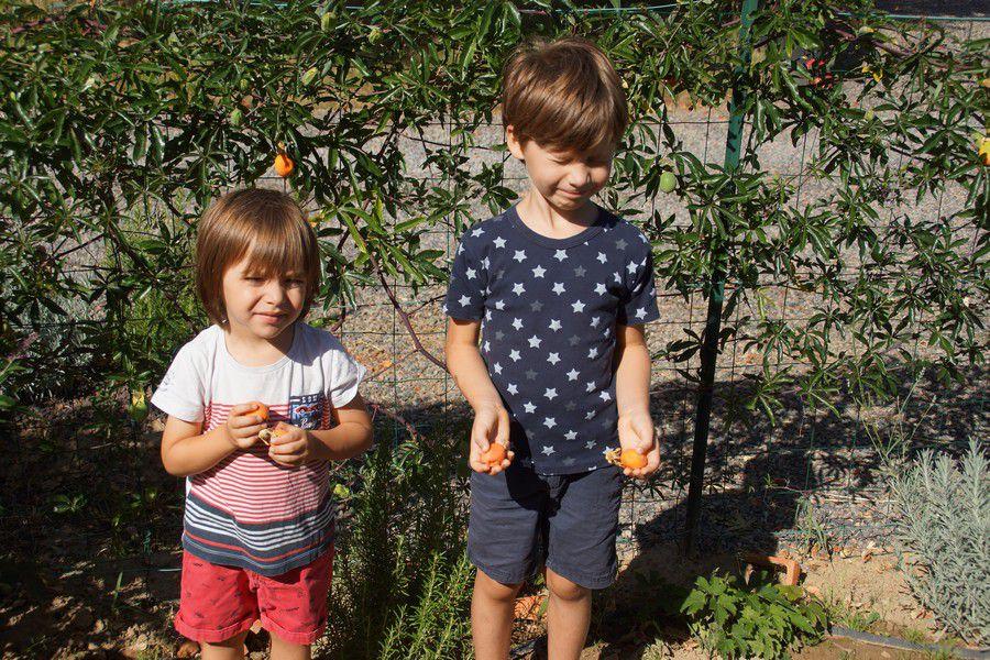 Arsène (le grand) et son frère Basile montrant les fruits de la passiflore.