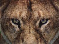 Album - mammifères terrestres