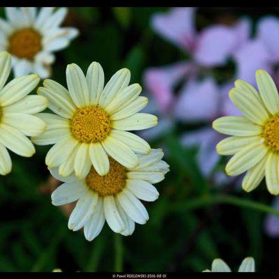 pour bien démarrer la journée, un bouquet du jardin...