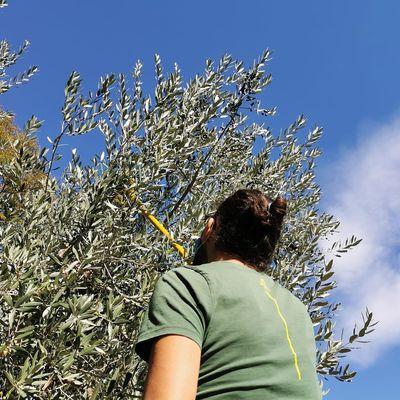 Di olive e altro