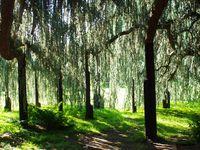 L'arborum de Robinson et ses arbres remarquables