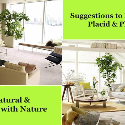 Suggestions to Make Home Placid and Pleasant