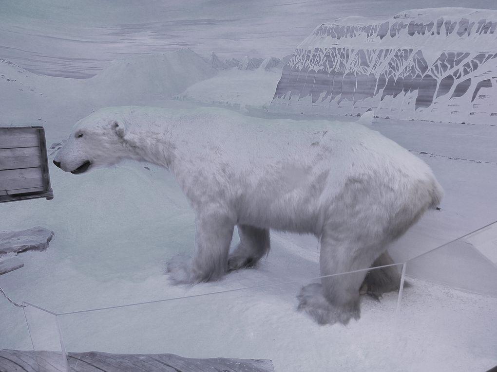 Musée polaire