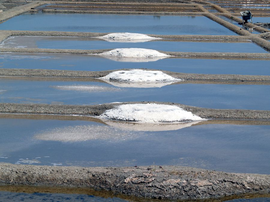 Fleur de sel de Guérande - Photos Thierry Weber Photographe La Baule Guérande