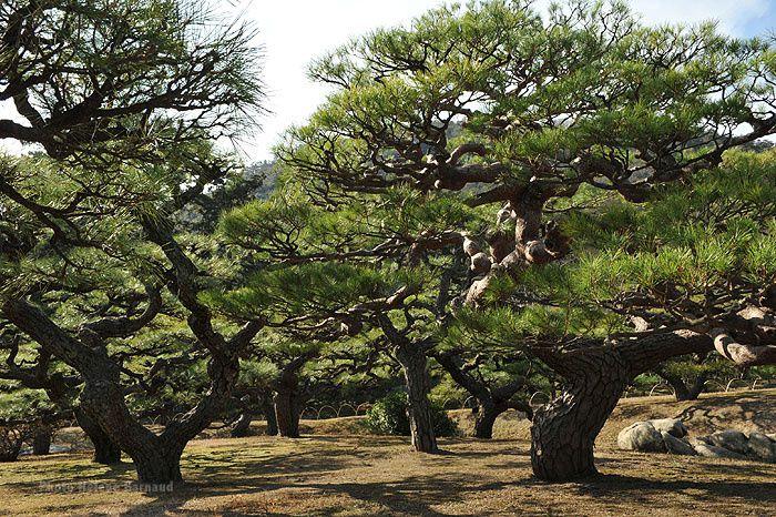 Tadotsu,Marugame,Kompira ,Takamatsu,Vallee d'Yia,Cap  Ashizuri,Matsuyama...