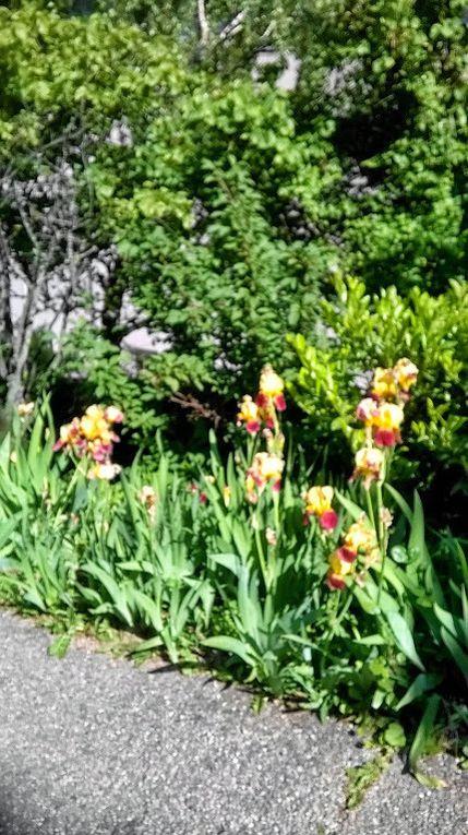 Fourvière - Jardins du Rosaire - Descente dans le quartier Saint Jean