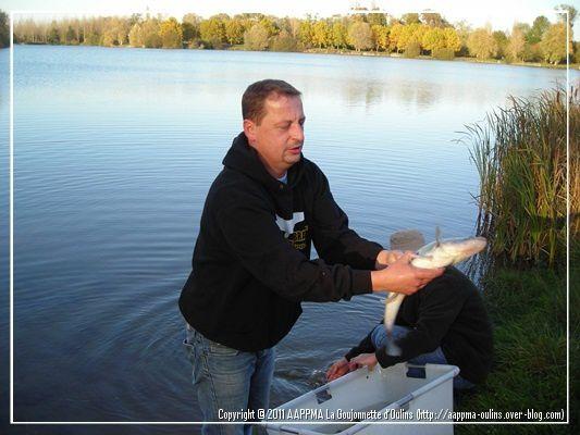 Alevinage réalisé sur le plan d'eau des Vintaines le 07 Novembre 2011. 200Kgs de gardons, quelques tanches et 50 kg de sandres.