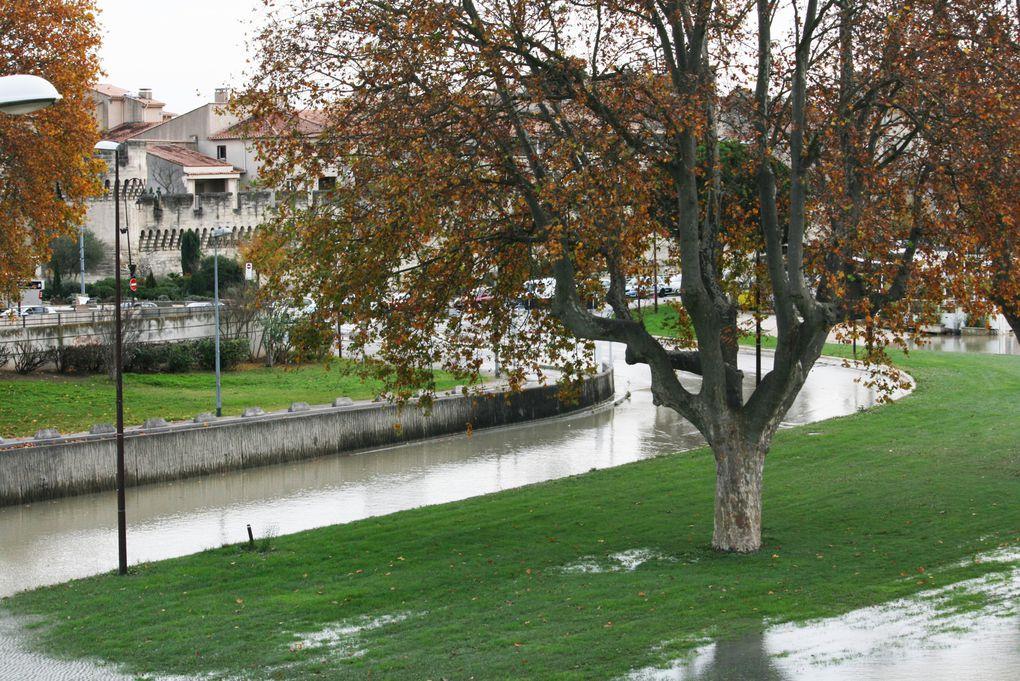 Crue du Rhône à Avignon, Novembre 2016