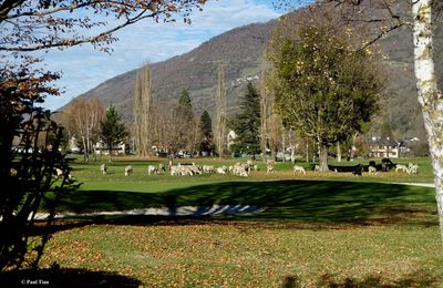Un jour, une photo : Golf de Luchon, que de monde !