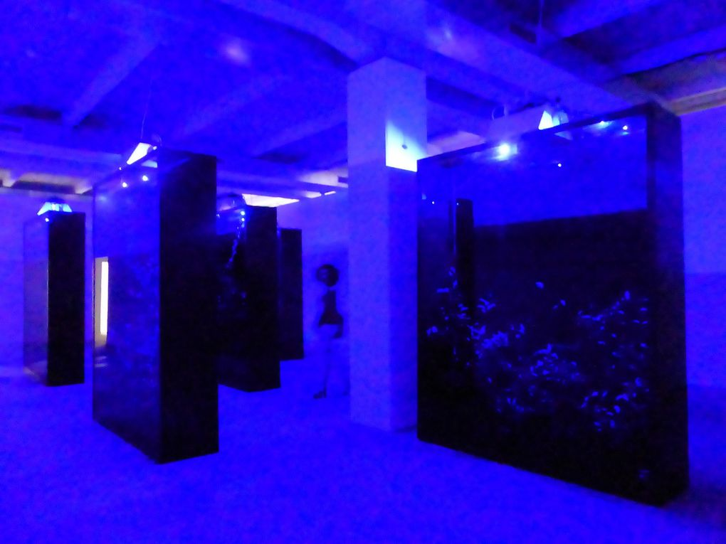 Vues de l'exposition La vie moderne. Biennale de Lyon, La Sucrière © Le Curieux des arts Gilles Kraemer, présentation presse, septembre 2015