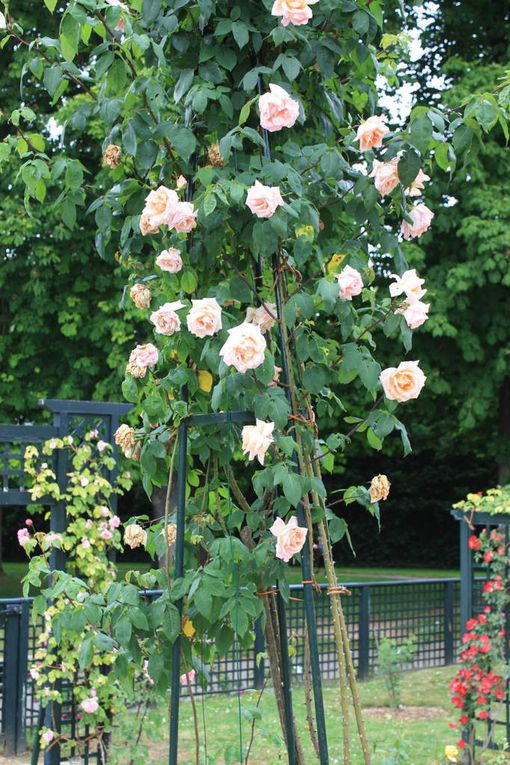 photo ajp l hay les roses 26 05 2018