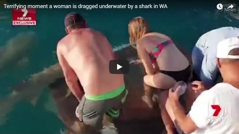 Vidéo – Un requin entraîne une Australienne dans des eaux infestées de crocodiles