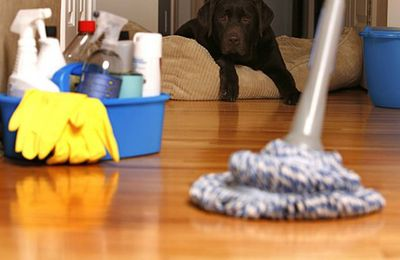 Professional Carpet Cleaning Service Provider