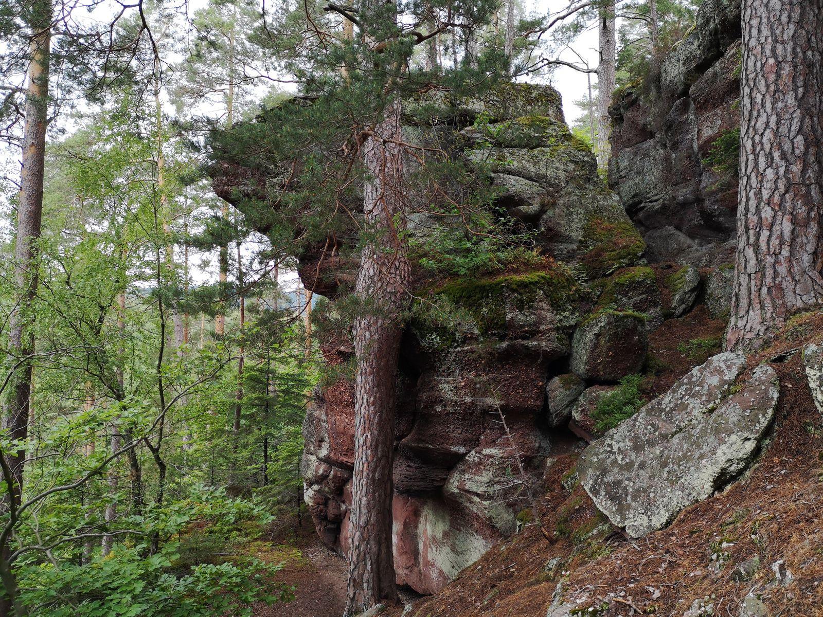 Et me voilà au Rotfels (373m) qui surplombe la vallée de la Mossig
