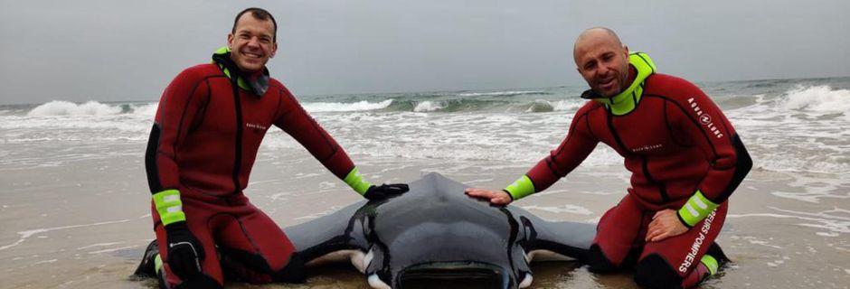 Insolite : une raie d'environ 150 kilos sauvée par les pompiers à Marseillan plage