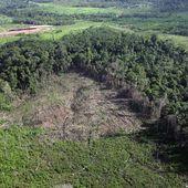 Garantir leurs terres aux indigènes d'Amazonie est source de richesse