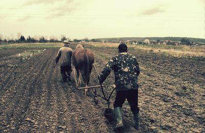 Agriculture : le retour de la traction animale, un fantasme capillotracté. Tiré par les chevaux ou par les cheveux ?