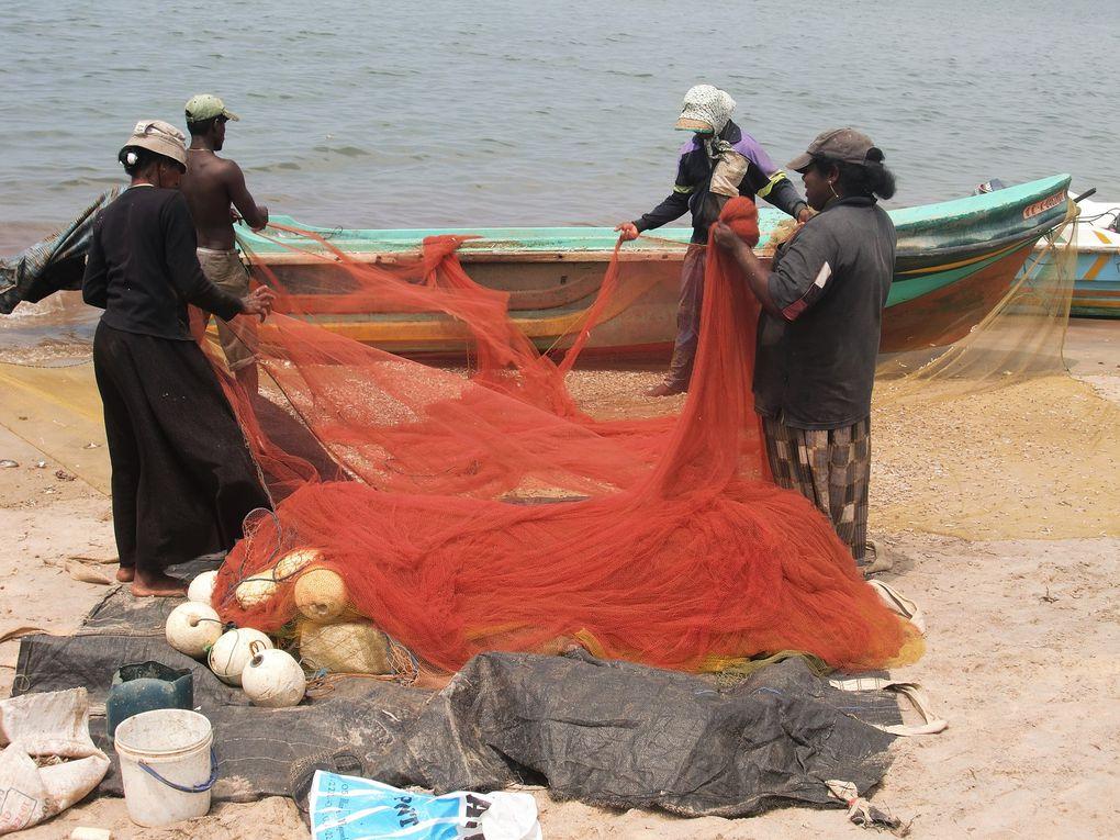 Retour de pêche au Sri-Lanka.