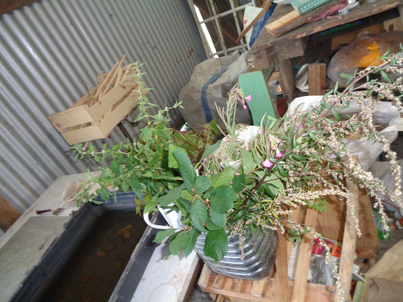 Après une balade cueillette des plantes tinctoriales , mise en place des végétaux , cuisson, rinçage et magie !!!!!