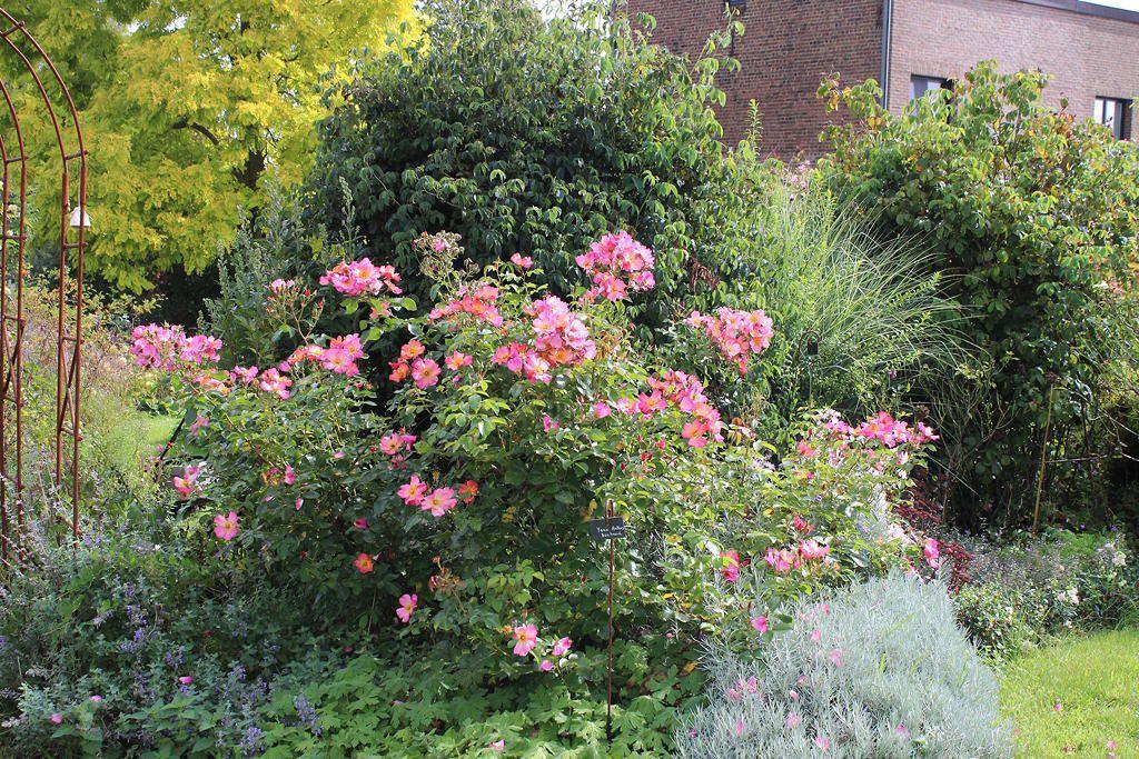 Un joli mois de septembre annonçant un automne qui devrait être bien fleuri...