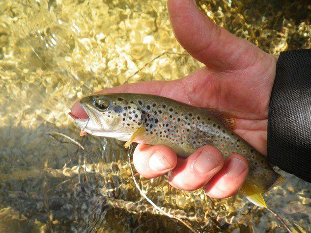 Une belle journée de pêche en ruisseau