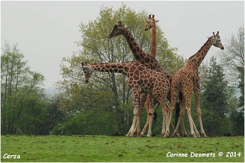 Parc Zoologique de Lisieux Cerza 2014