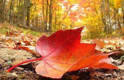Petit poème automne