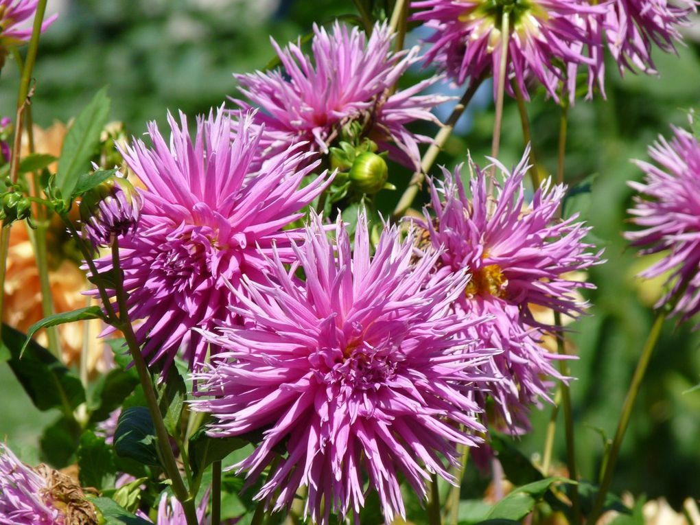 Fleurs 54