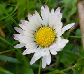 Mon jardin de fille :  Les fleurs du jardin