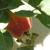 Humour Adam et Eve: Coquine création - Doc de Haguenau