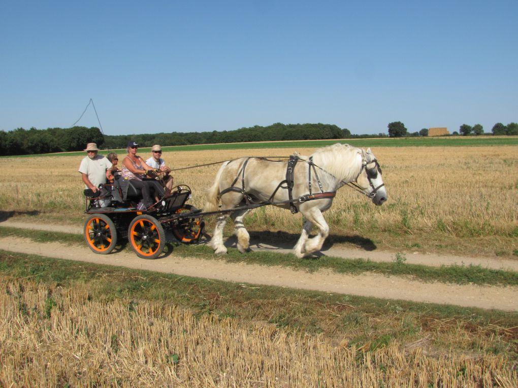 Album - 2012-08-10au12-Vicq-sur-Gartempe