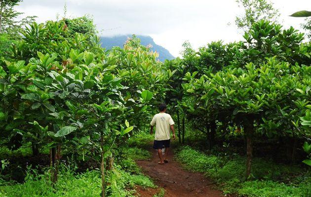 Le village Katu