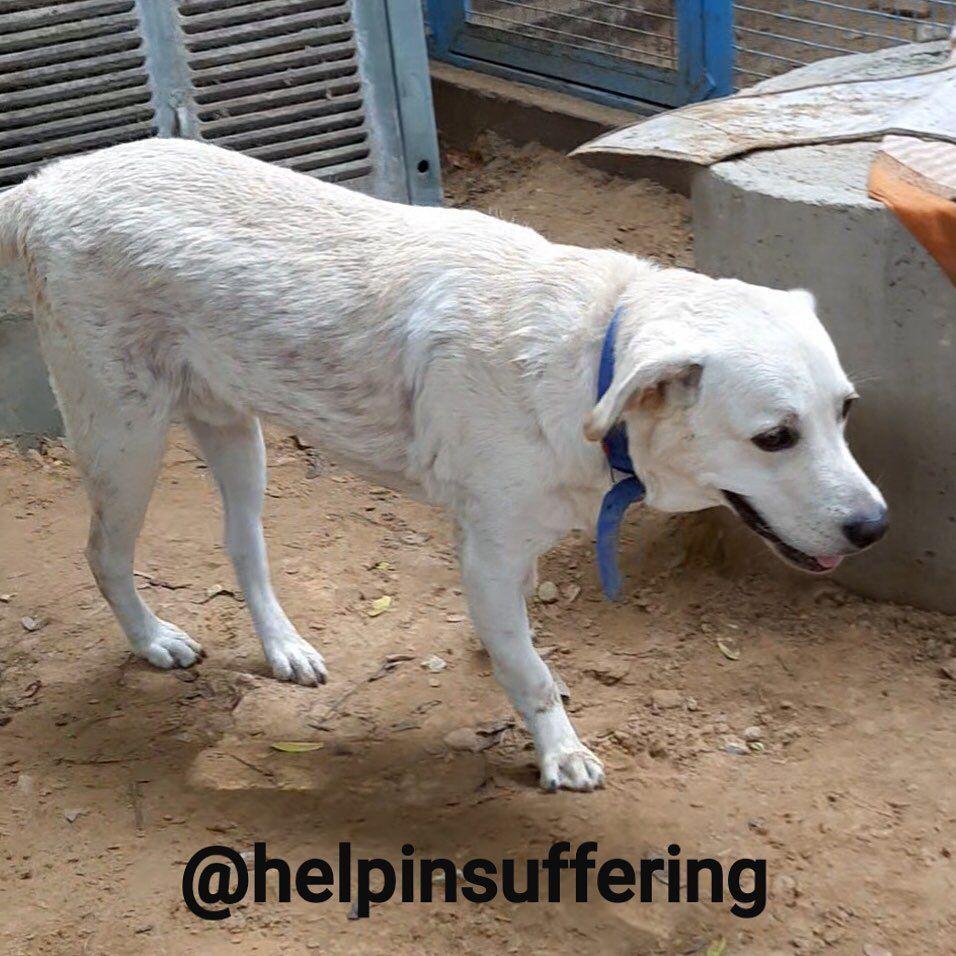Help in Suffering- Jaipur, Rajasthan-India