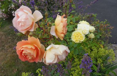 Mes roses Anglaises