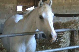 Soigner votre cheval avec les moyens du bord : l'aspirine