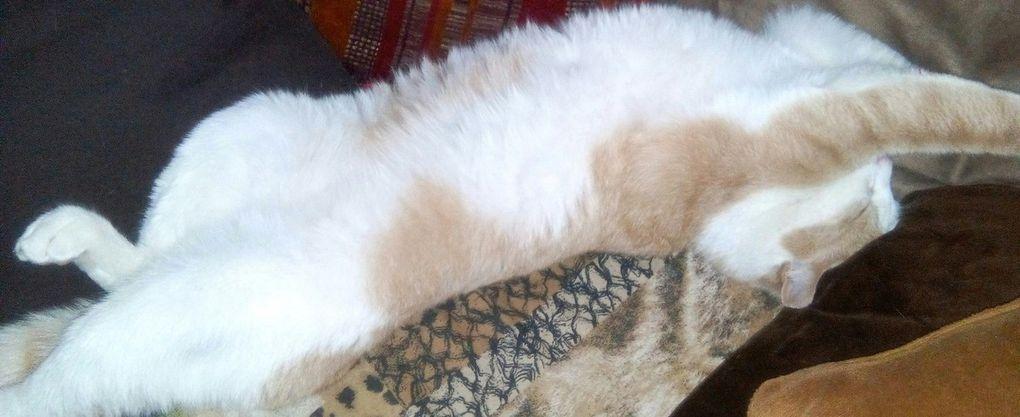 Le chat et les caresses sur le ventre, toute une histoire !