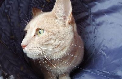 Oliver découvre le tunnel de jeu avec couchage Zolia de Zoomalia