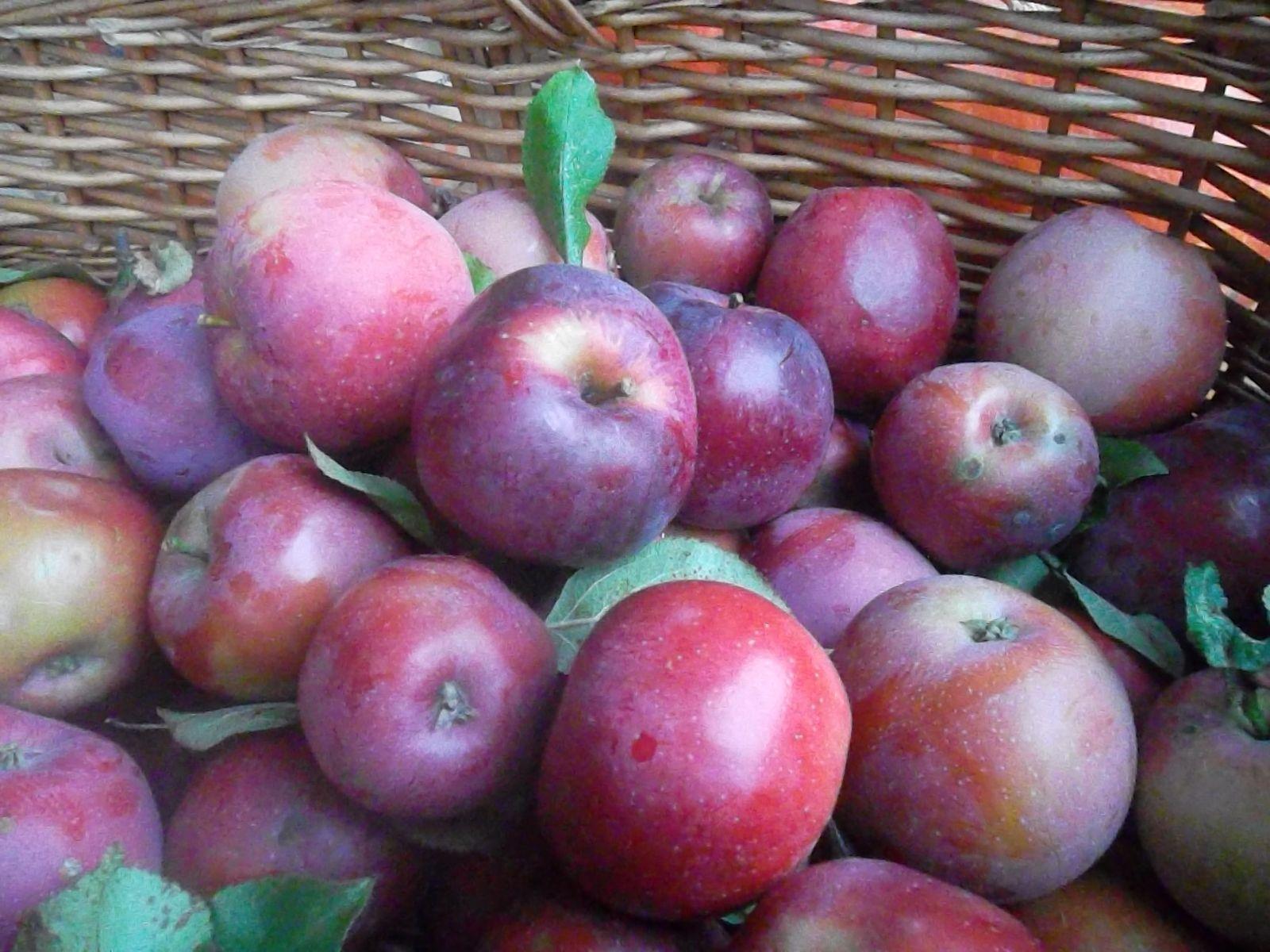 Pommes : cédez à la tentation… pour votre beauté !