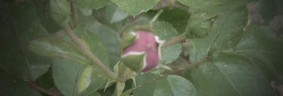 Une touche de charme et de romantisme dans le petit jardin