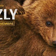 Grizzly : Des oursons à croquer