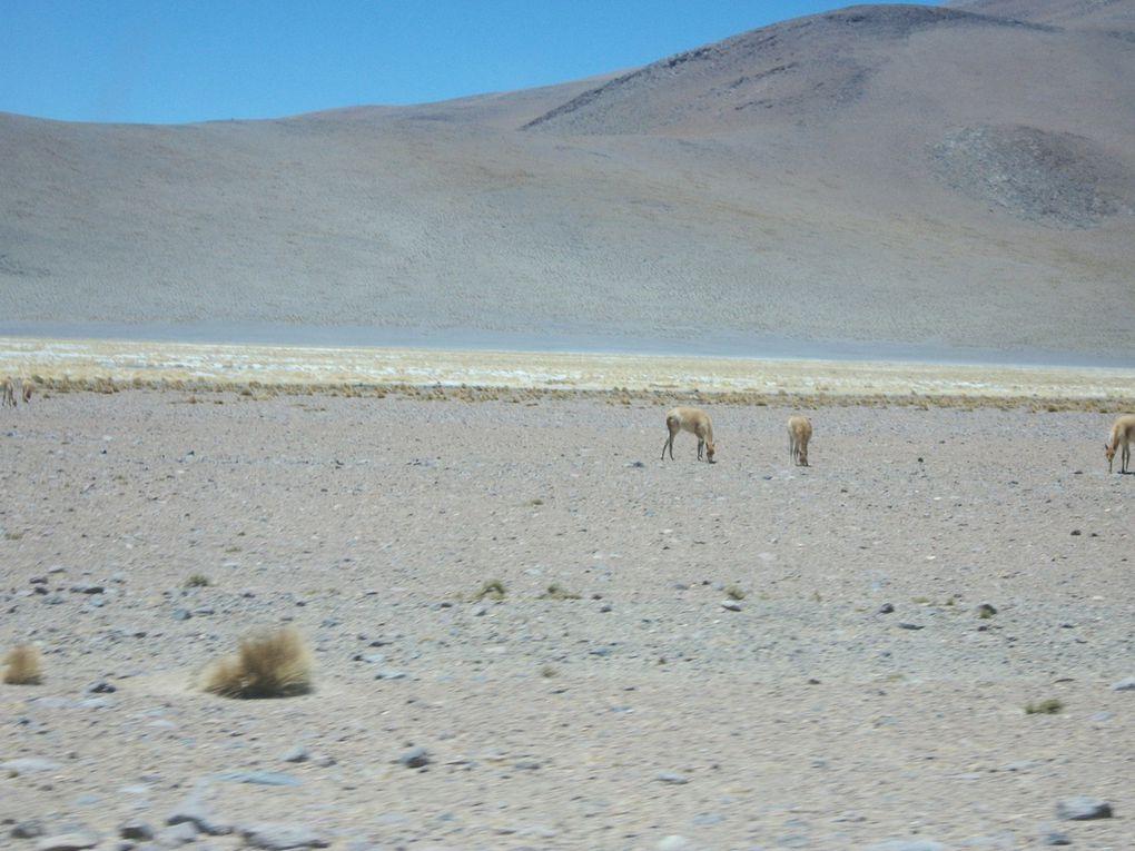 lama à Quetena Chico, laguna verde et le volcan Licancabur (Chili), désert de Dali ,repas à aguas termales de nouveau au retour, geysers,passage glacé à 5200m,   laguna colarada et ses flamants....zorro (renard),  Villa mar dodo.......