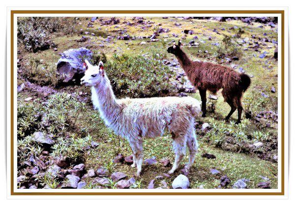 Pérou  - Bolivie 1973 -  de Cuzco  à La Paz - diapositives