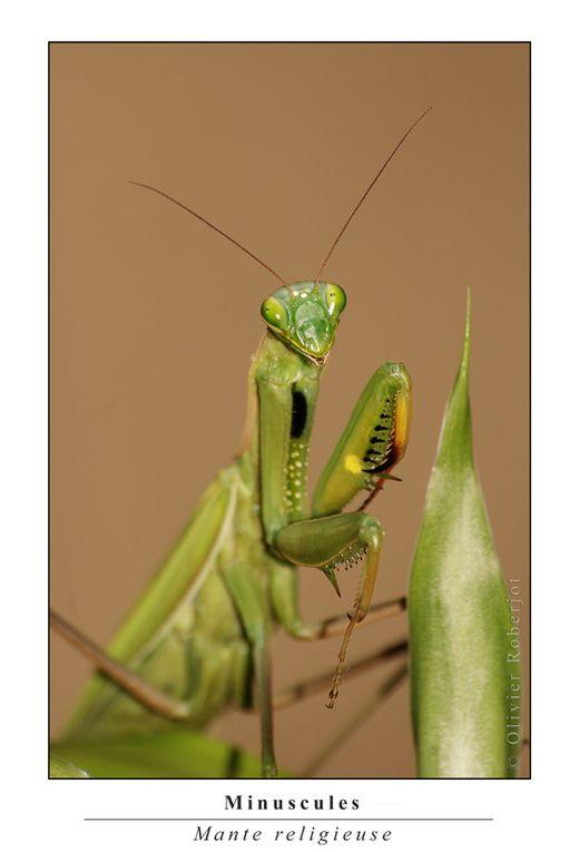 Une selection de photos d'insectes divers.