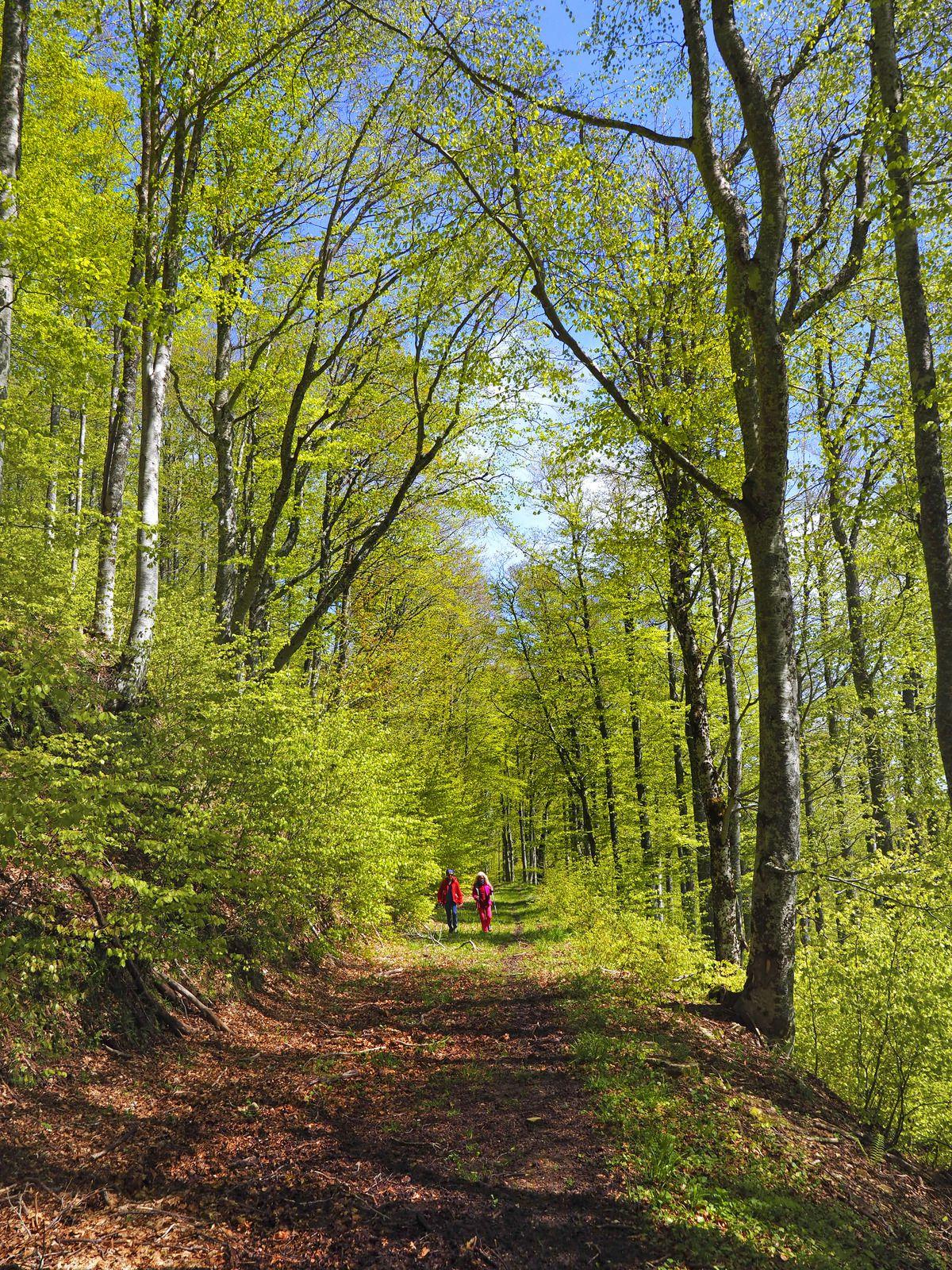 Sur la piste qui traverse tout le versant est du Roc de Toulau. L'ambiance est forestière, mais surtout plus calme qu'à Gardiole.