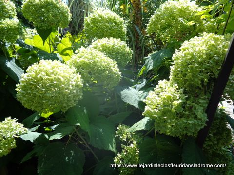 Le jardin Le Clos fleuri en septembre