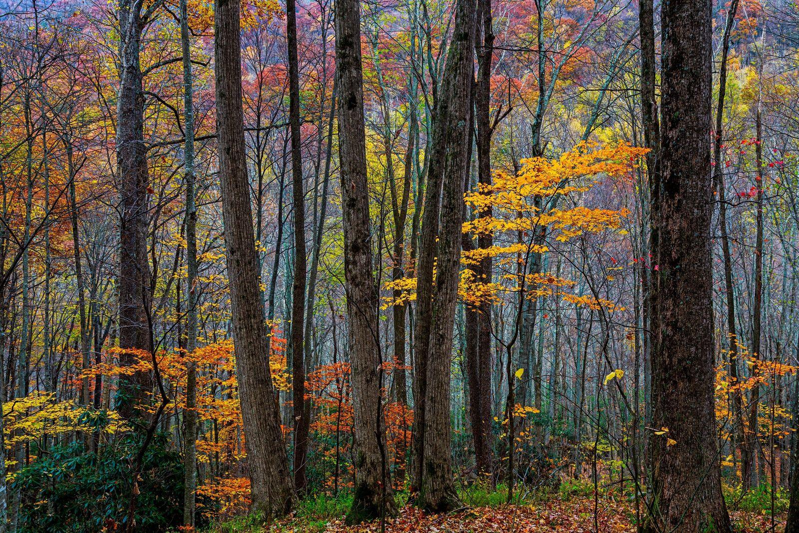 Les couleurs de l'automne d'Art Wolfe