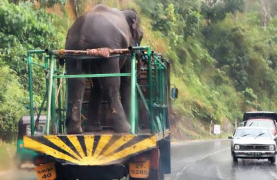 Sur les routes du Sri Lanka