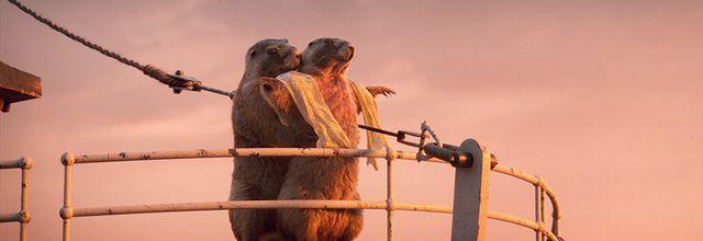 Les marmottes font leur retour cet été sur France 3