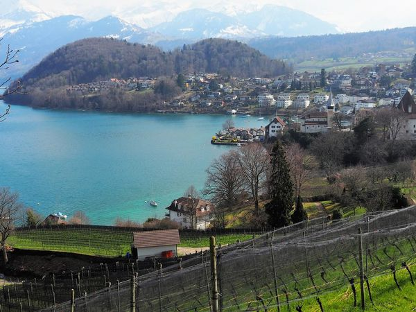 BE-Spiez-Lac de Thoune
