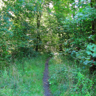 carrefour_Route Tournante sous le Mont Saint-Mard_Chemin de la Fontaine Maître-Jean